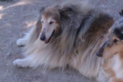 La terza età canina