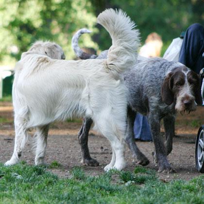 La Comunicazione canina in foto