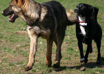 L'insistenza del cagnolino nero spinge la lupa a girare la testa per calmarlo