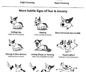 Il linguaggio del corpo e la paura