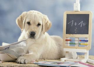 A scuola dai cani