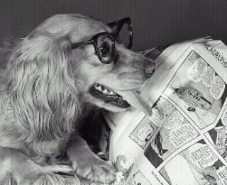 Il cane da pastore e la pecora: Intelligenza o stupidità?
