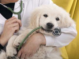 Il cucciolo di cane dal veterinario