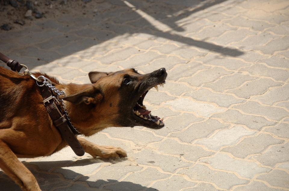 Serotonina e Aggressività nel Cane