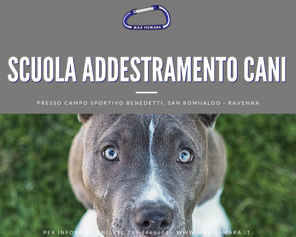 Addestramento Cani Max Vismara Ravenna